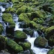 Rain Forest Stream Poster
