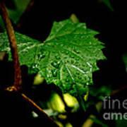 Rain On Ivy Poster