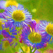 Rainbow Colored Weed Daisies Poster