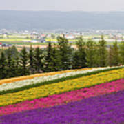 Rainbow Fields Of Furano Poster