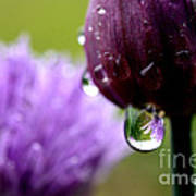 Raindrops On Chives Poster