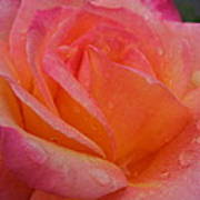 Raindrops On Roses Nine Poster