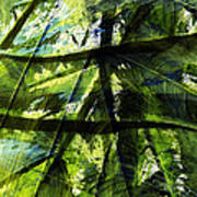 Rainforest Abstract Poster by Bonnie Bruno