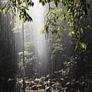 Rainforest, Bellingen, Australia Poster