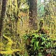 Rainforest Salad Bar Poster