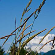 Rainier Weeds Poster