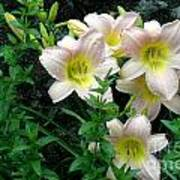 Rainy Day Day Lilies Poster