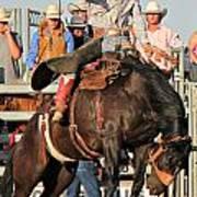 Ranch Bronc Rider Poster