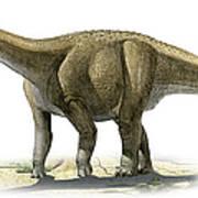 Rapetosaurus Krausei, A Prehistoric Era Poster