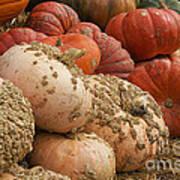 Rare Pumpkins Poster