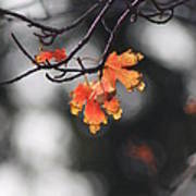 Red And Yellow Fall Leave's Closeup Poster