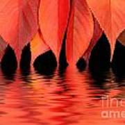 Red Autumn Leaves In Water Poster