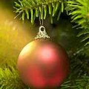 Red Ball In A Real Caucasian Fir Christmas Tree Poster