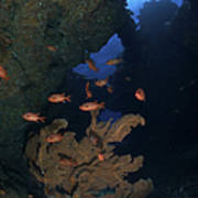 Red Bigeye Fish And Sea Fan In An Poster by Mathieu Meur