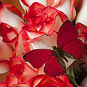 Red Butterfly On Blush Roses Poster