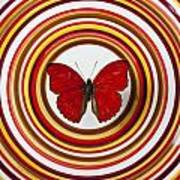 Red Butterfly On Plate With Many Circles Poster by Garry Gay