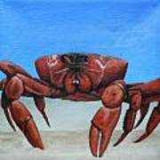 Red Crab Poster