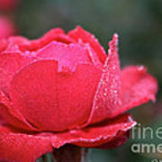Red Crystal Petals Poster