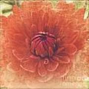 Red Dahlia Poster