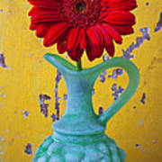 Red Daisy In Grape Vase Poster