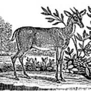 Red Deer Poster by Granger
