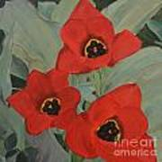 Red Emperor Tulip Study Poster
