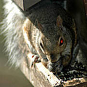 Red Eyed Demon Squirrel Poster