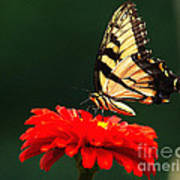 Red Flower And Butterfly Poster
