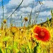 Red Flower In The Field Poster
