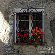 Red Geraniums In Window Poster