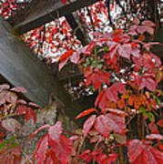 Red Grape Leaves And Beams Poster