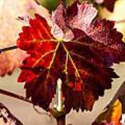 Red Grapeleaves Poster