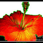 Red Hibiscus With Special Effects Poster
