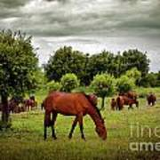 Red Horses Poster