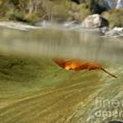 Red Leaf Floating Poster