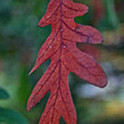 Red Leaf Hanging Poster