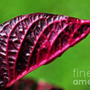 Red Leaf Poster by Kaye Menner