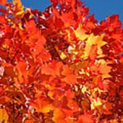 Red Orange Yellow Autumn Leaves Art Prints Vivid Bright Poster