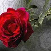 Red Paris Rose Poster