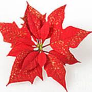 Red Poinsettia Flower Poster