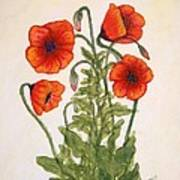 Red Poppies Watercolor Painting Poster