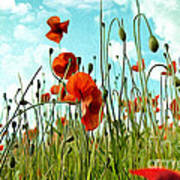 Red Poppy Flowers 03 Poster