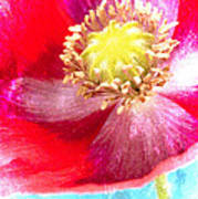Red Poppy On Blue Poster