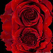 Red Rose Dew Poster