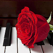Red Rose On Piano Poster