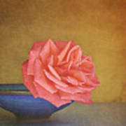 Red Rose Poster by Photo - Lyn Randle