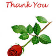 Red Rose Thank You Card Poster