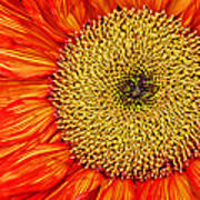 Red Sunflower Iv Poster