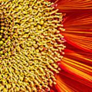 Red Sunflower Viiii Poster