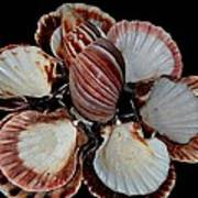 Red-toned Seashells Poster